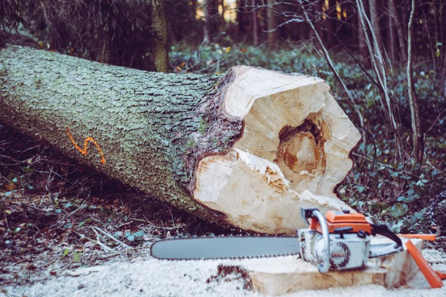 Buying a Chainsaw? Things you Need to Know. Read this first. 1