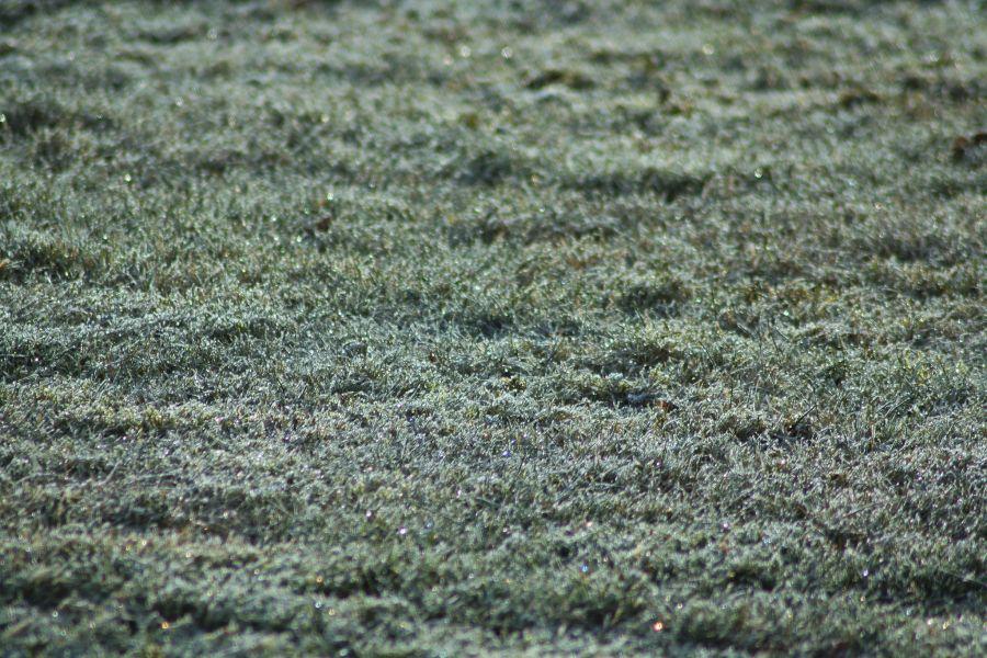Prepare Your Lawn for The Winter 2