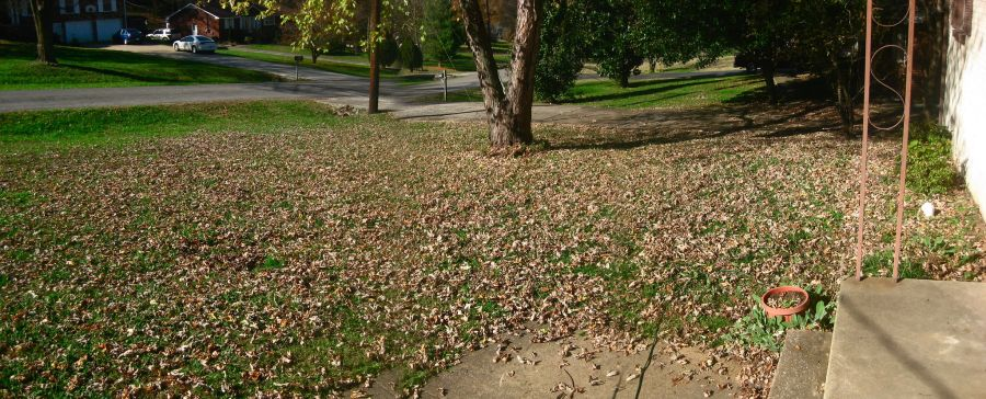 Mowing leaves instead of raking, these are the best methods 1