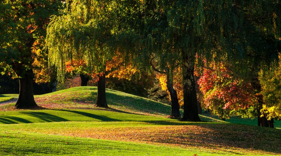 Mowing your lawn in the fall, this is what you need to do 1