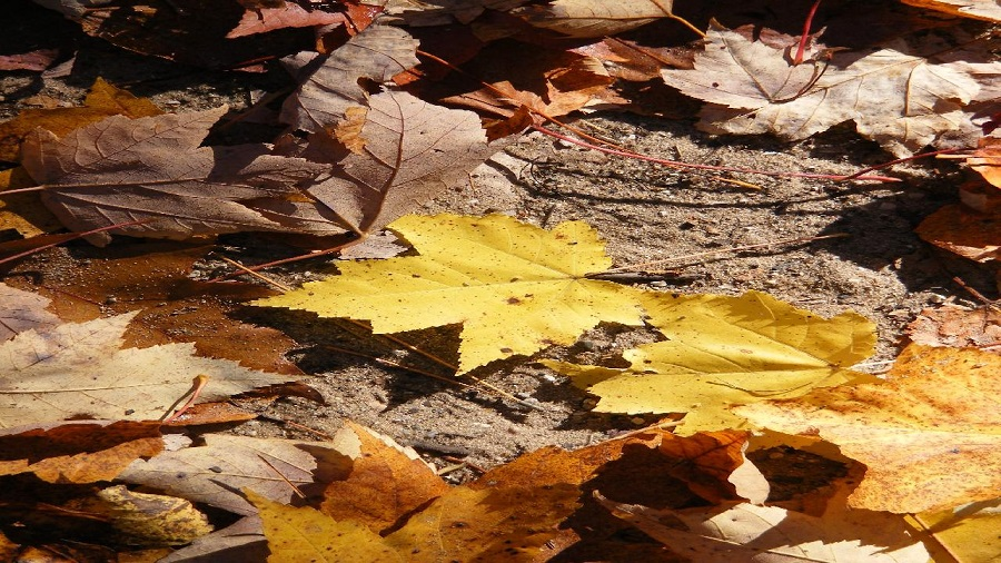 Mowing Leaves in the fall, is it an effective method to remove your leaves? 1
