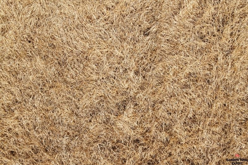 Mowing dormant grass, what is the best way? 1