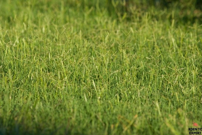 Mowing Bermuda Grass, what is the best way? 1
