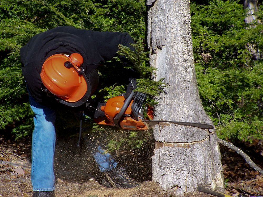 Chainsaw Accessories, what should each user have.. 1