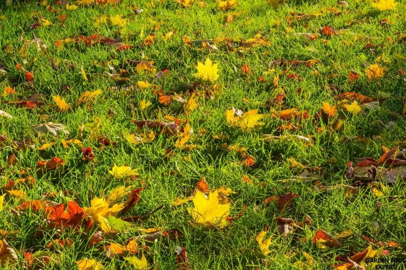 Mowing wet leaves, what is the best way? 1