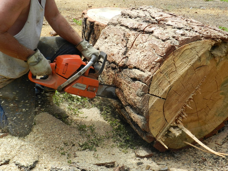 Chainsaw Debarker: Tips from a Professional 1