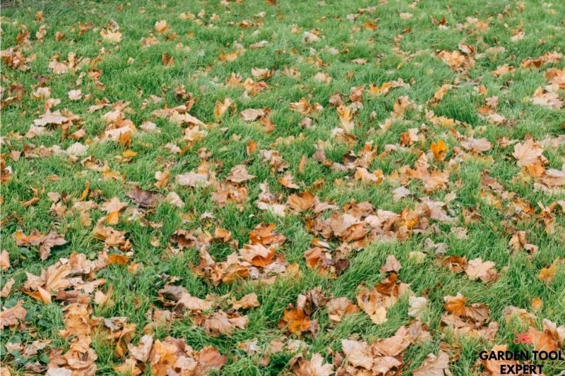 Mowing Over Leaves, this is how to remove your leaves easily 1
